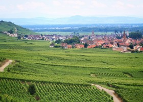 vineyard-762891_960_720