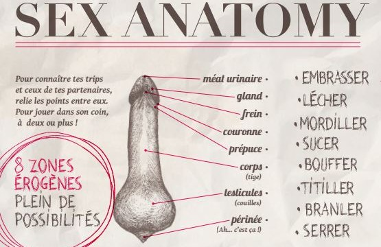 Sex-Anatomy