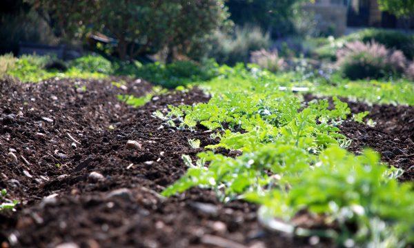 agriculture-glyphosate-france